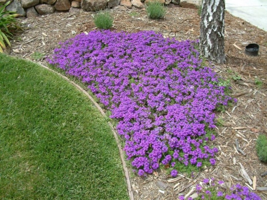 Fire Wise Ground Covers